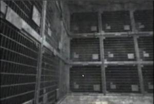 DULCE Base: Kinder Käfige genannt Specht Grille